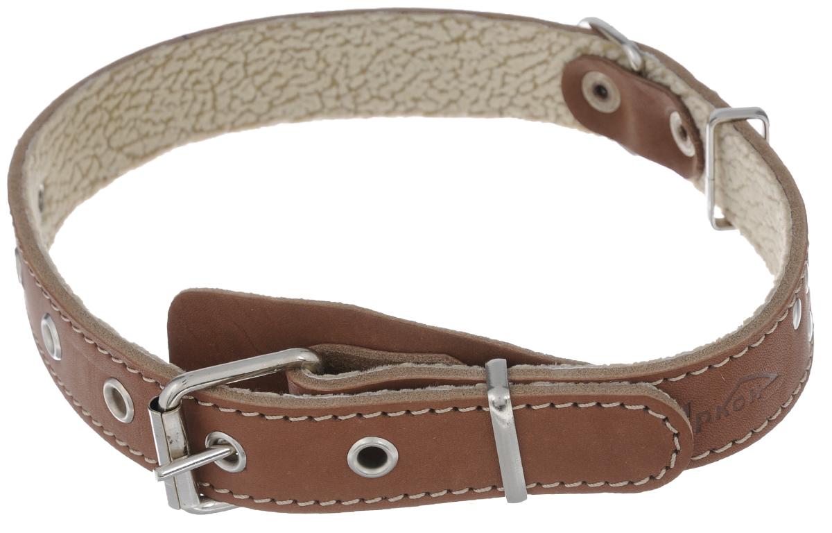 Ошейник Аркон Стандарт, цвет: коньячный, ширина 2,5 см, длина 57 см комплект для собак аркон стандарт 6 цвет красный 2 предмета