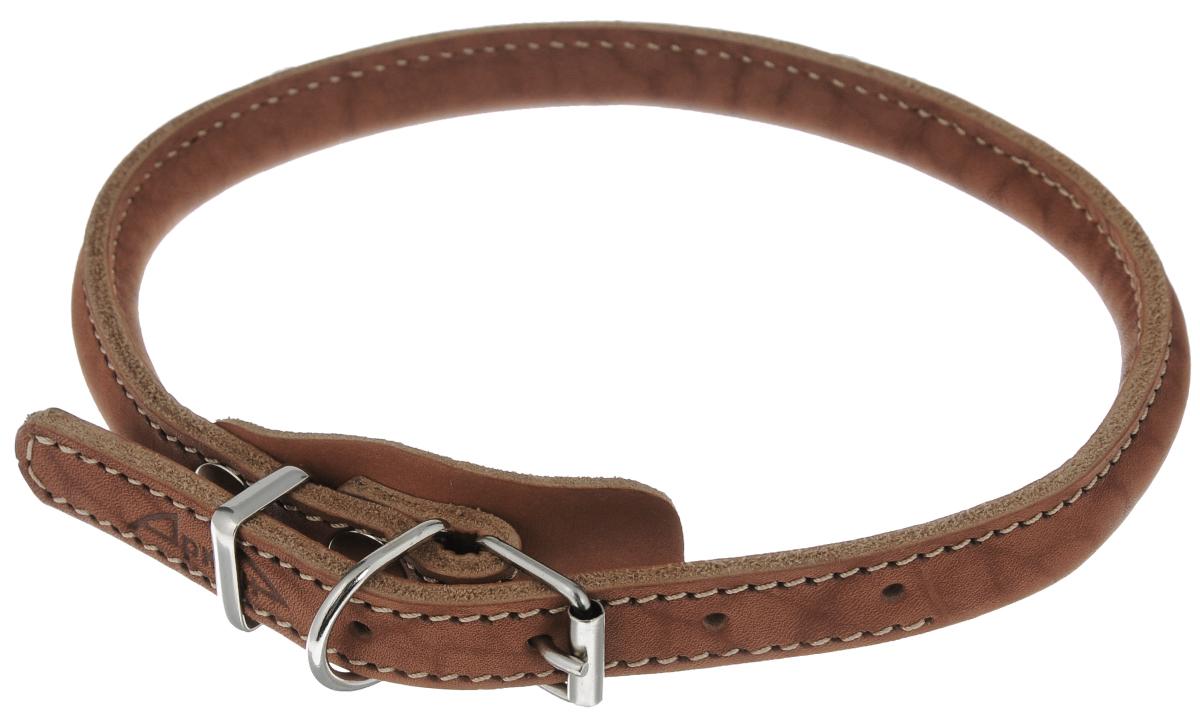 Ошейник для чау-чау Аркон Стандарт, цвет: коньячный, 56 см ошейник удавка для собак аркон стандарт цвет черный у16плч