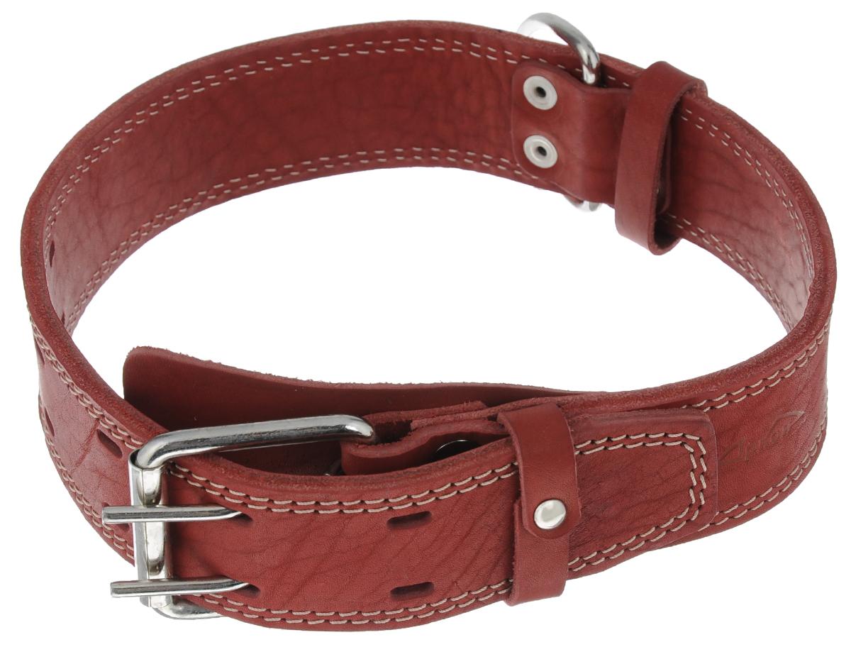Ошейник Аркон Стандарт, цвет: красный, ширина 4,5 см, длина 69 см. о35/2с комплект для собак аркон стандарт 6 цвет красный 2 предмета