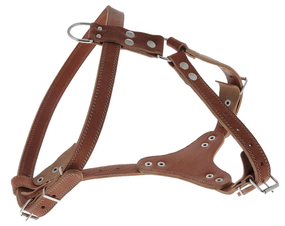 Шлейка водильная Аркон Стандарт №3, цвет: коньячный, ширина 2,5 см комплект для собак аркон стандарт 6 цвет красный 2 предмета