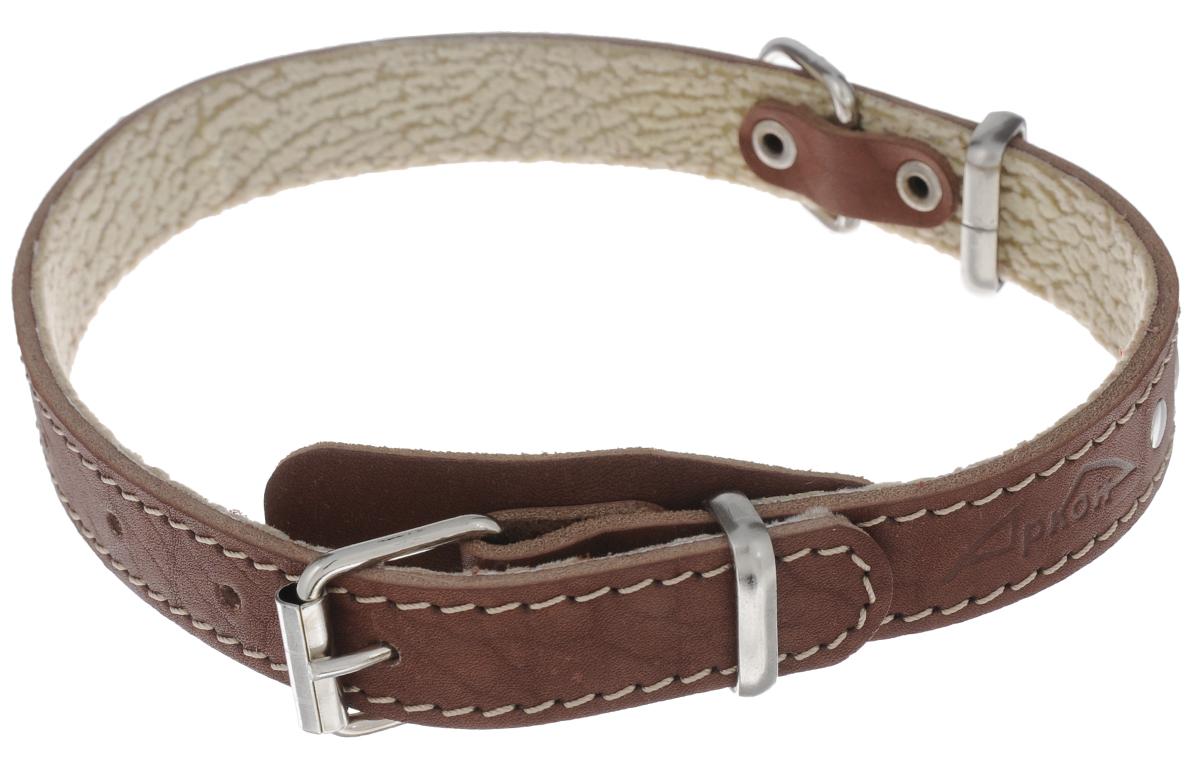 Ошейник для собак Аркон Стандарт, цвет: коньячный, ширина 2 см, длина 49 см коньячный набор