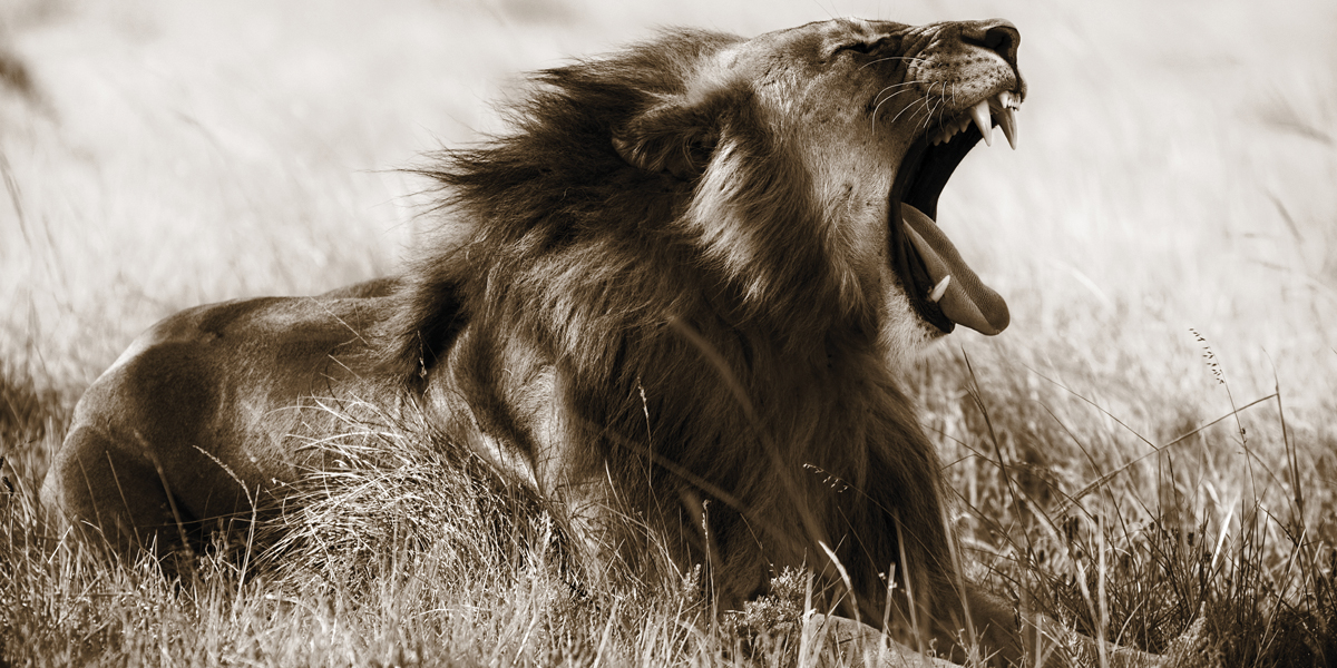 Картина на холсте Decoretto Art Царь зверей, 60 х 30 см картина на холсте decoretto art царь зверей 60 х 30 см