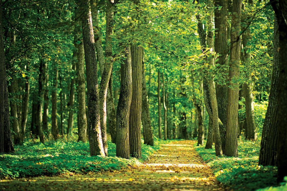 Фотообои Decoretto Дорожка в лесу, 360 х 254 см