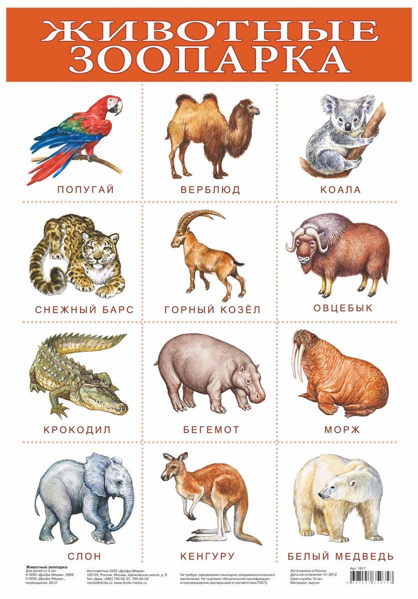 Дрофа-Медиа Обучающий плакат Животные зоопарка