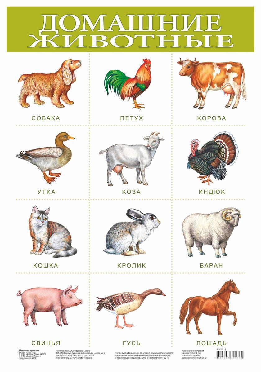 Дрофа-Медиа Обучающий плакат Домашние животные дрофа медиа сделай сам павлин жираф брелок
