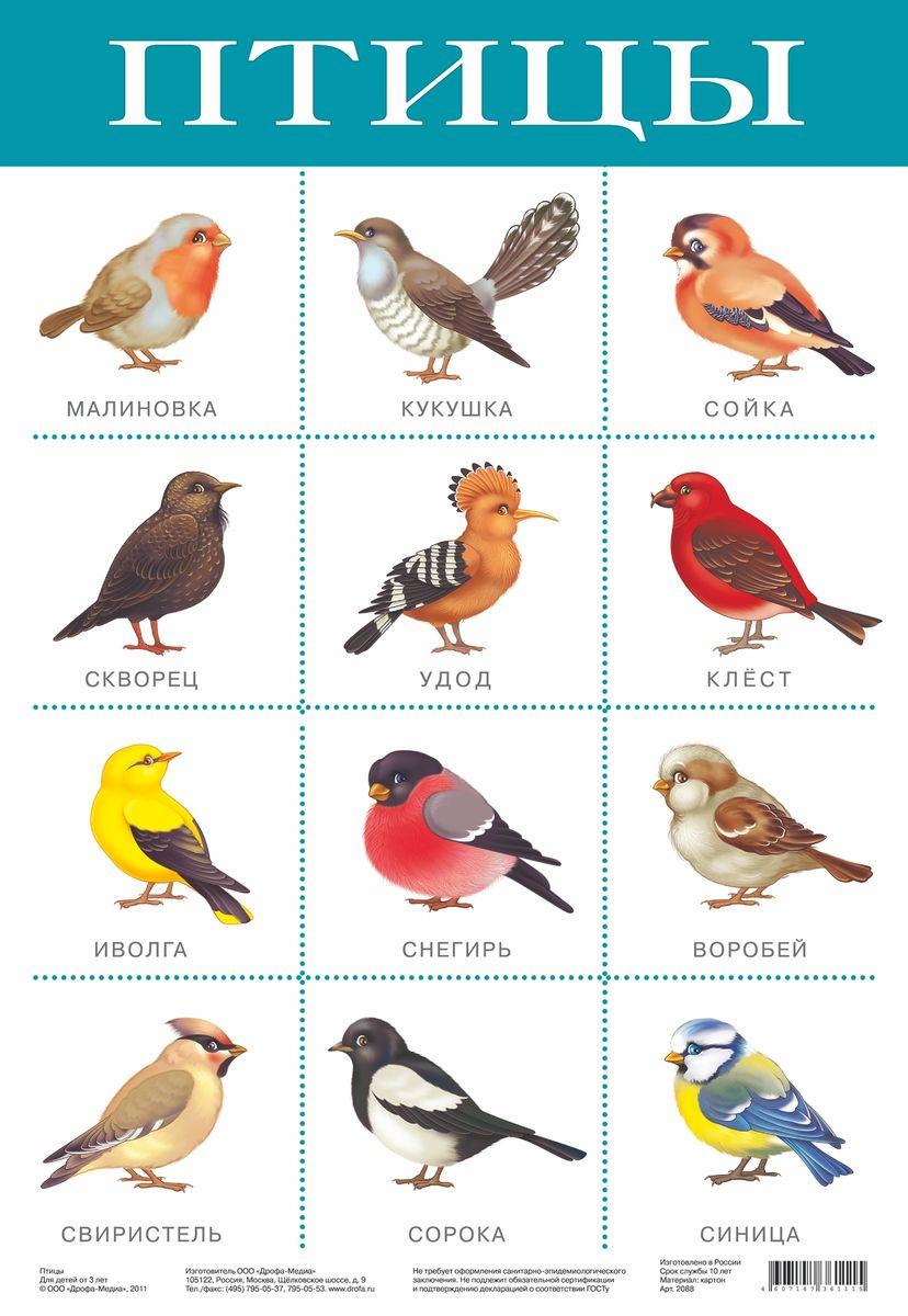 Дрофа-Медиа Обучающий плакат Птицы дрофа медиа
