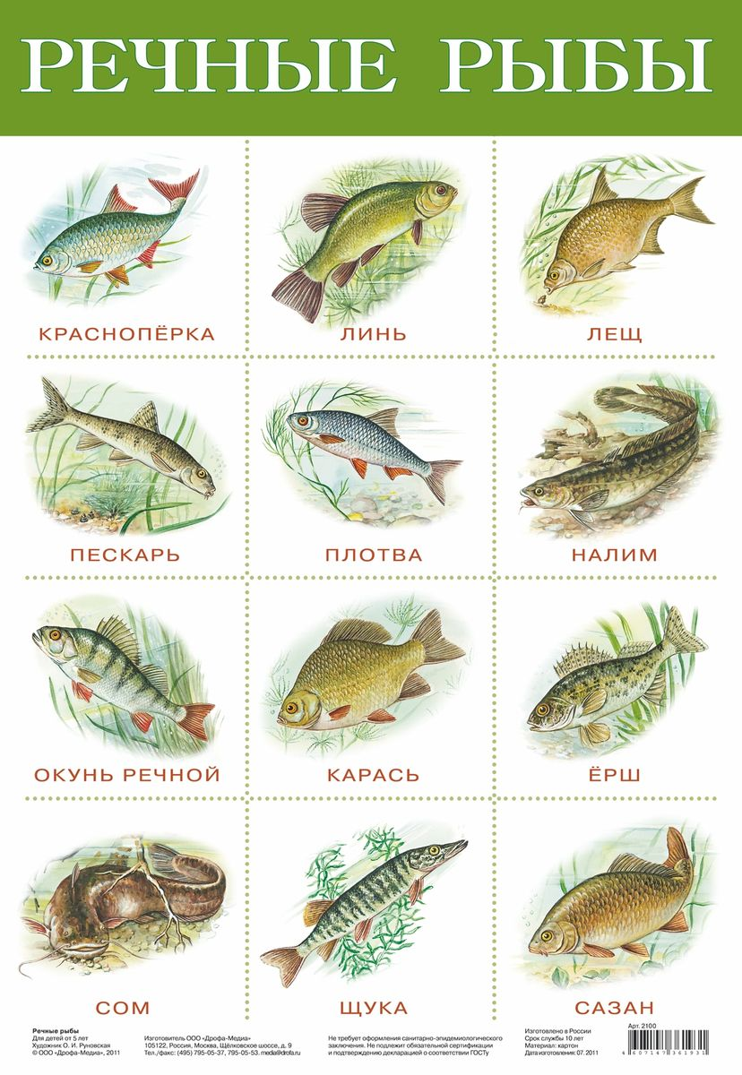 Дрофа-Медиа Обучающий плакат Речные рыбы дрофа медиа белоснежка