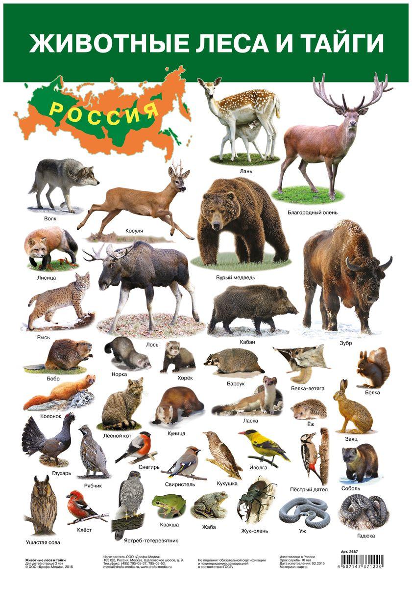 Дрофа-Медиа Обучающий плакат Животные леса и тайги