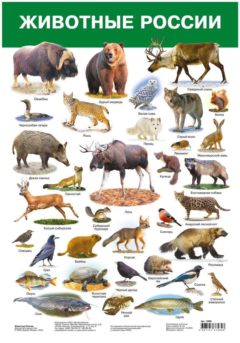 Дрофа-Медиа Обучающий плакат Животные России дрофа медиа белоснежка