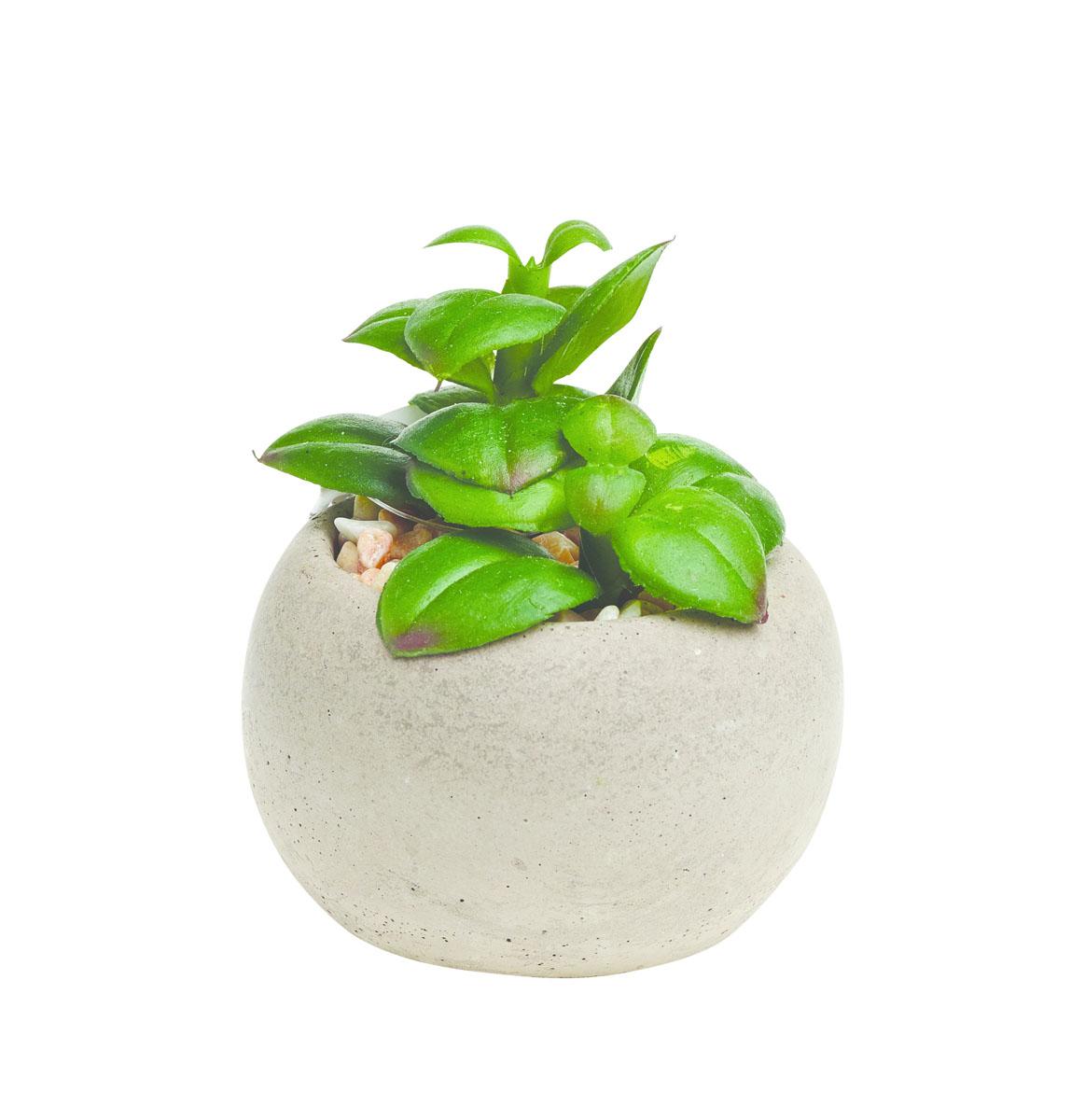 Растение суккулентное Gardman, в круглом горшке, 8,5 х 6 см. 02860-2