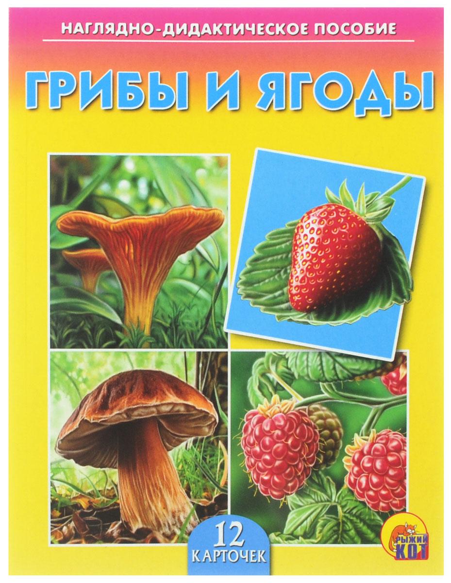 Рыжий Кот Обучающие карточки Грибы и ягоды рыжий кот обучающие карточки грибы и ягоды