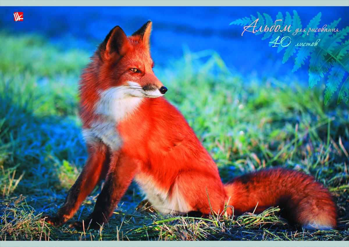 Канц-Эксмо Альбом для рисования Рыжая лисица 40 листовА401338Альбом для рисования Канц-Эксмо Рыжая лисица непременно порадует вашего малыша и вдохновит его на творчество. Яркая, красочная, креативная обложка привлечет внимание юного художника. Обложка альбома оформлена красочным мелованным картоном с выборочным лаком и с изображением рыжей лисички. Внутренний блок представлен 40 листами и изготовлен из высококачественной плотной бумаги, что гарантирует чистоту рисунков, высокое качество и комфорт при рисовании. Рисование поможет раскрыть таланты малыша, а также способствует развитию мелкой моторики и художественного вкуса. А с альбомом для рисования Канц-Эксмо Рыжая лисица рисовать легко и приятно!Рекомендуемый возраст: от 6 лет.