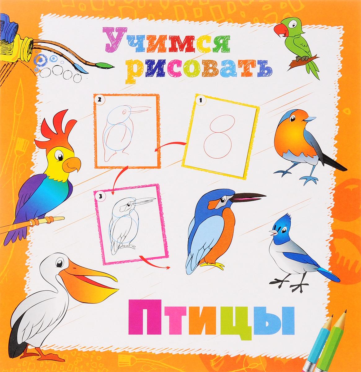 Птицы. Книжка-раскраска