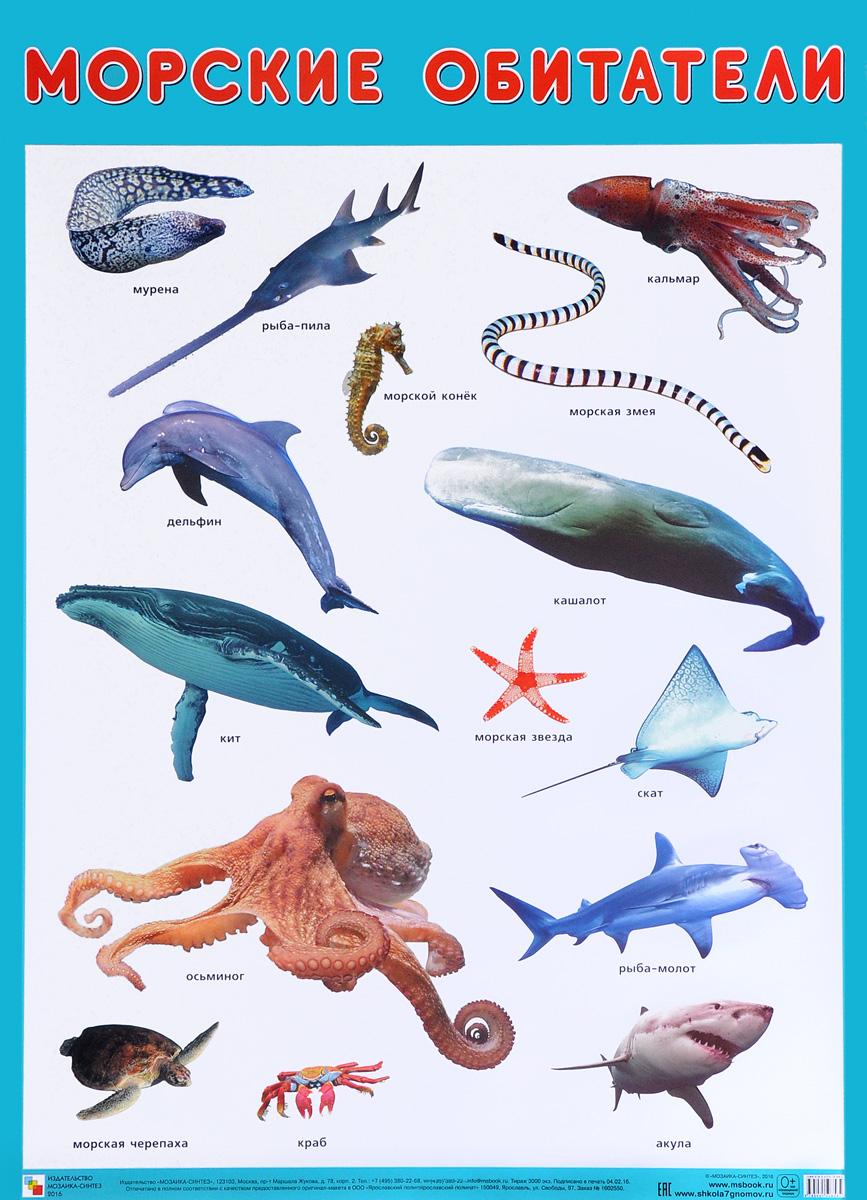 Морские обитатели. Плакат zhorya обучающая книга для детей на бат умный я морские обитатели с маркером 26x19x2см арт zye e0109