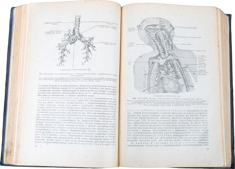 Топографическая анатомия.