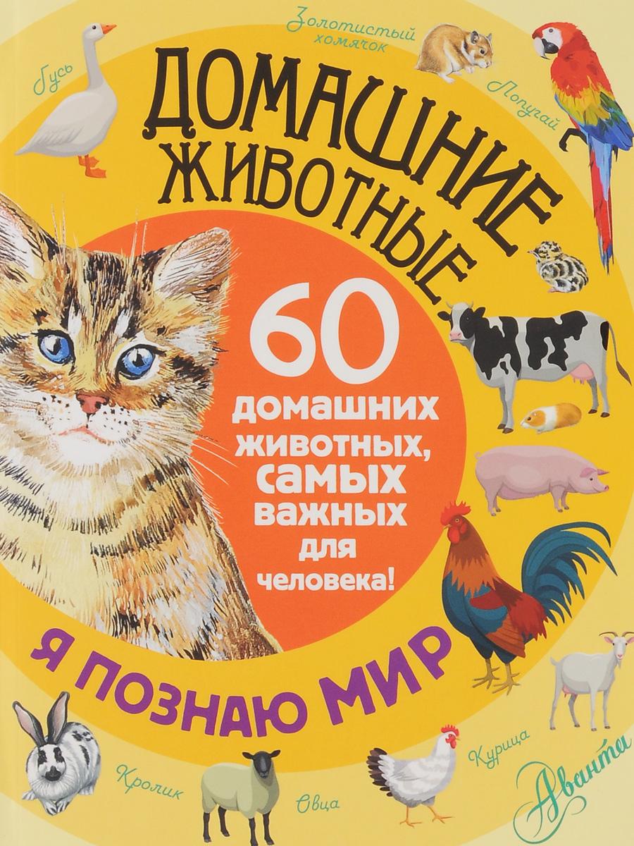 Е. Ю. Снегирёва Домашние животные. 60 домашних животных самых важных для человека! алексеева е кит и другие морские животные