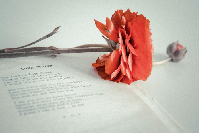 Открытка Love street. Автор Вероника ДорофееваDN10-007Оригинальная дизайнерская открытка «Love street» выполнена из плотного матового картона. На лицевой стороне расположена репродукция фото-работы Вероники Дорофеевой с цветком и книгой.Такая открытка станет великолепным дополнением к подарку или оригинальным почтовым посланием, которое, несомненно, удивит получателя своим дизайном и подарит приятные воспоминания.