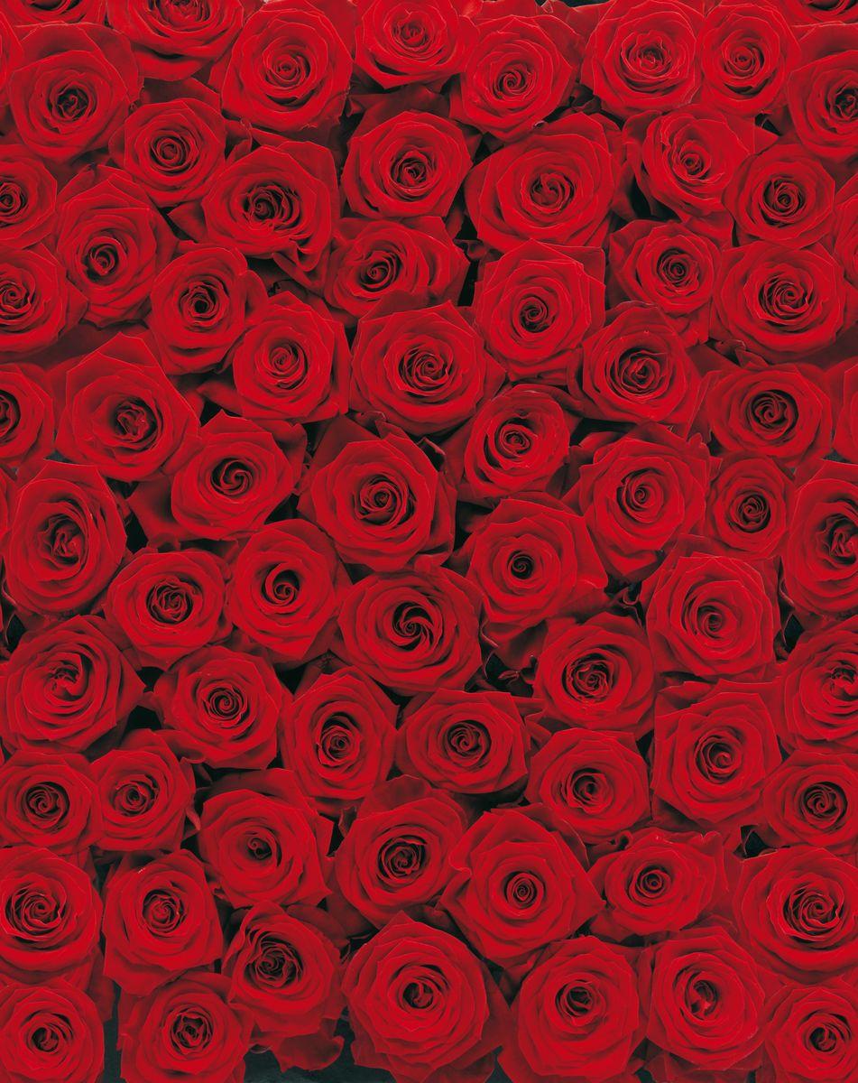 Фотообои Komar Розы, 1,94 х 2,7 м4-077Бумажные фотообои известного бренда Komar позволят создать неповторимый облик помещения, в котором они размещены. Фотообои наносятся на стены тем же способом, что и обычные обои. Благодаря превосходной печати и высококачественной основе такие обои будут радовать вас долгое время. Фотообои снова вошли в нашу жизнь, став модным направлением декорирования интерьера. Выбрав правильную фактуру и сюжет изображения можно добиться невероятного эффекта живого присутствия.Ширина рулона: 1,94 м.Высота полотна: 2,7 м. Клей в комплекте.