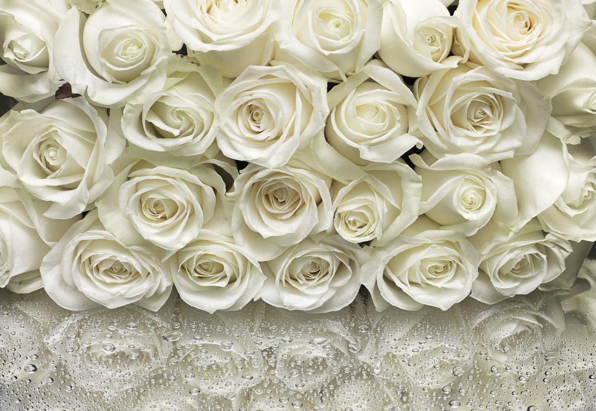 Фотообои Komar Белые розы, 3,68 х 2,54 м8-314Бумажные фотообои известного бренда Komar позволят создать неповторимый облик помещения, в котором они размещены. Фотообои наносятся на стены тем же способом, что и обычные обои. Благодаря превосходной печати и высококачественной основе такие обои будут радовать вас долгое время. Фотообои снова вошли в нашу жизнь, став модным направлением декорирования интерьера. Выбрав правильную фактуру и сюжет изображения можно добиться невероятного эффекта живого присутствия.Ширина рулона: 3,68 м.Высота полотна: 2,54 м. Клей в комплекте.