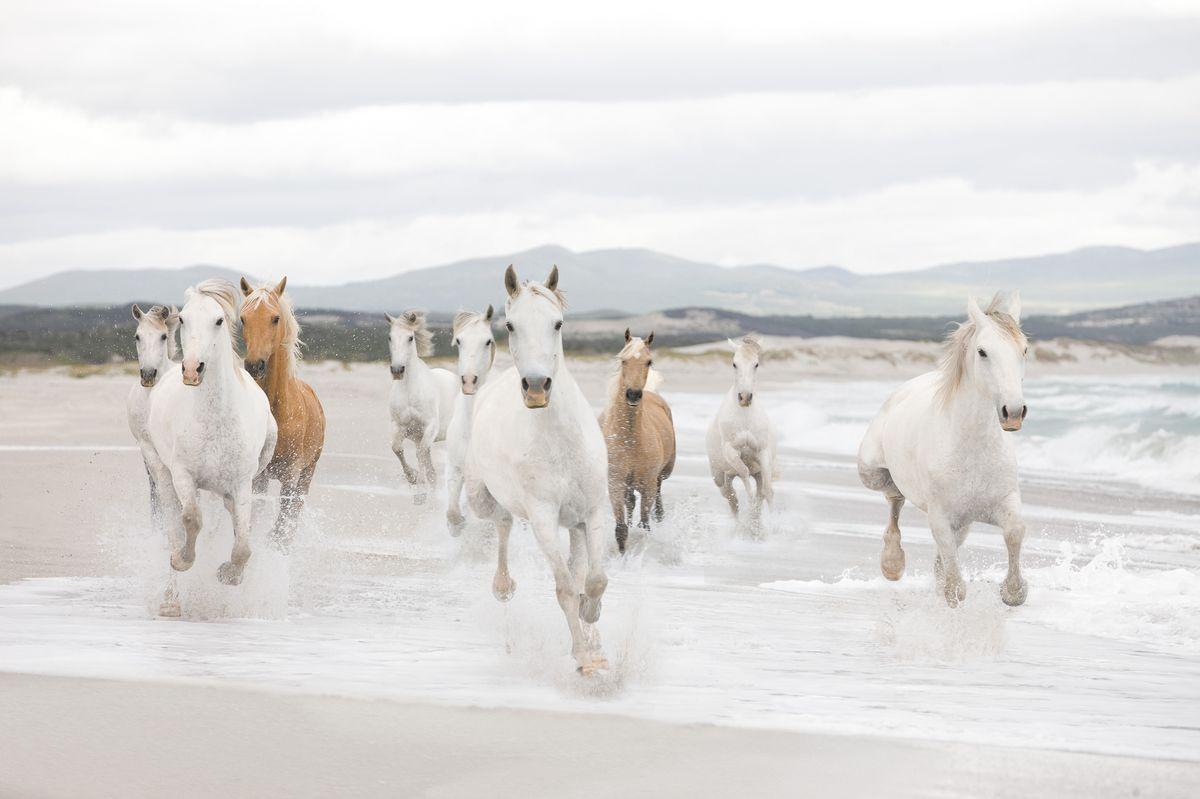 Фотообои Komar Белые лошади, 3,68 х 2,54 м8-986Бумажные фотообои известного бренда Komar позволят создать неповторимый облик помещения, в котором они размещены. Фотообои наносятся на стены тем же способом, что и обычные обои. Благодаря превосходной печати и высококачественной основе такие обои будут радовать вас долгое время. Фотообои снова вошли в нашу жизнь, став модным направлением декорирования интерьера. Выбрав правильную фактуру и сюжет изображения можно добиться невероятного эффекта живого присутствия.Ширина рулона: 3,68 м.Высота полотна: 2,54 м. Клей в комплекте.