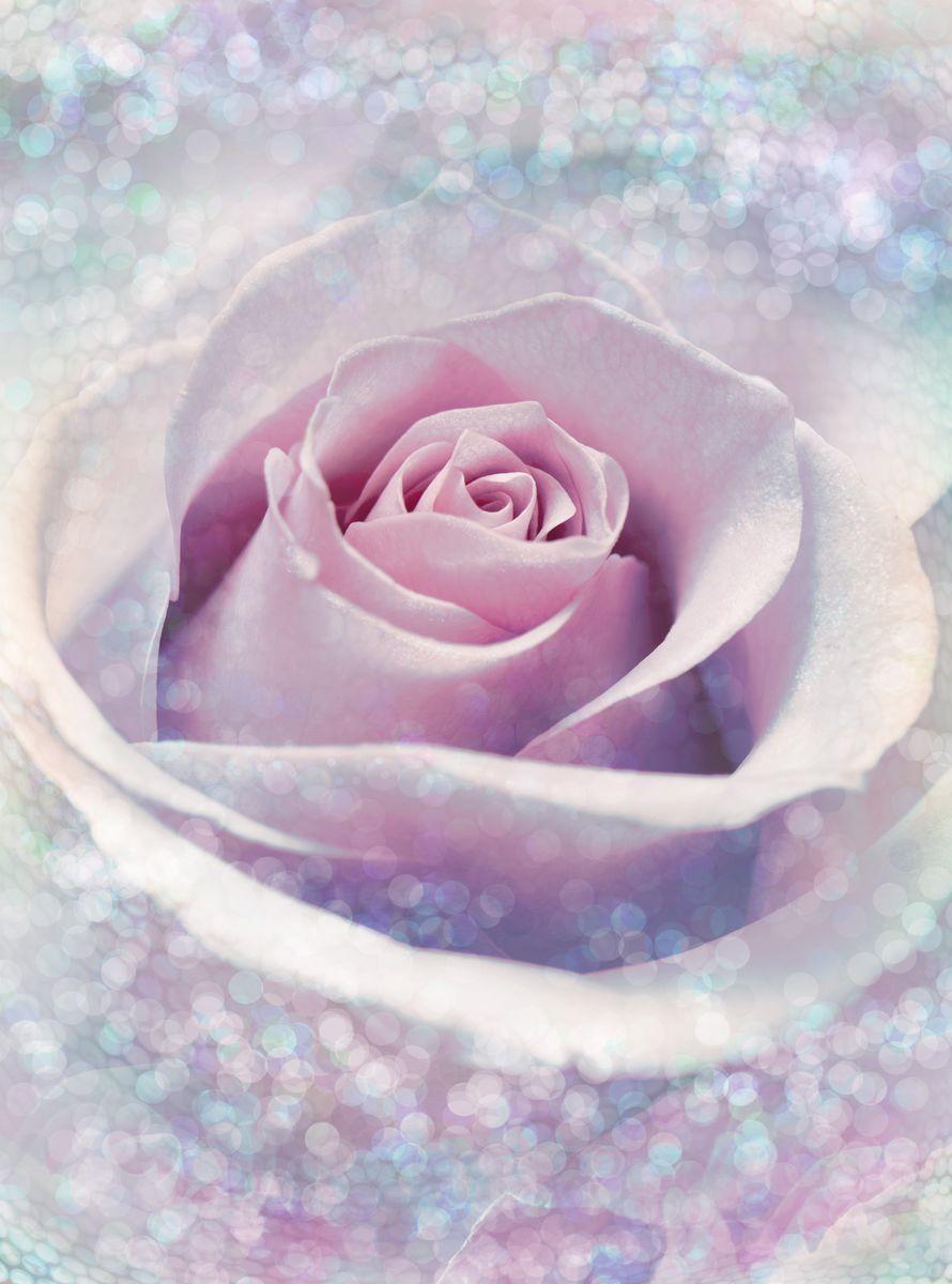 Фотообои Komar Нежная роза, 1,84 х 2,48 мXXL2-020Флизелиновые фотообои известного бренда Komar позволят создать неповторимый облик помещения, в котором они размещены. Фотообои наносятся на стены тем же способом, что и обычные обои. Благодаря превосходной печати и высококачественной флизелиновой основе такие обои будут радовать вас долгое время.Фотообои снова вошли в нашу жизнь, став модным направлением декорирования интерьера. Выбрав правильную фактуру и сюжет изображения можно добиться невероятного эффекта живого присутствия. Ширина рулона: 1,84 м.Высота полотна: 2,48 м.