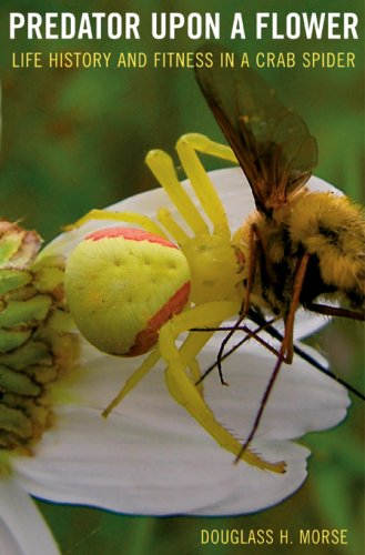 Predator upon a Flower – Life History and Fitness in a Crab Spider набор ключей комбинированных dexx 27017 h6
