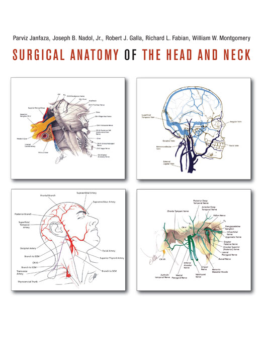 Surgical Anatomy of the Head and Neck bix a1042 anatomy of the head cerebral artery model wbw299
