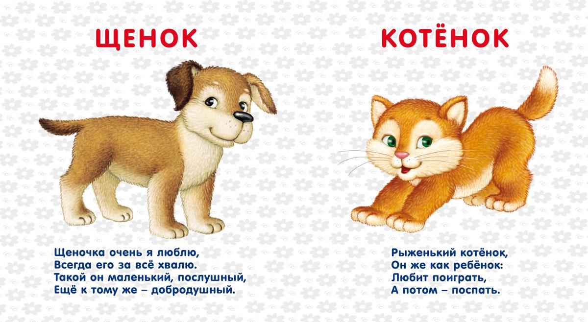 Стих про домашних животных в картинках