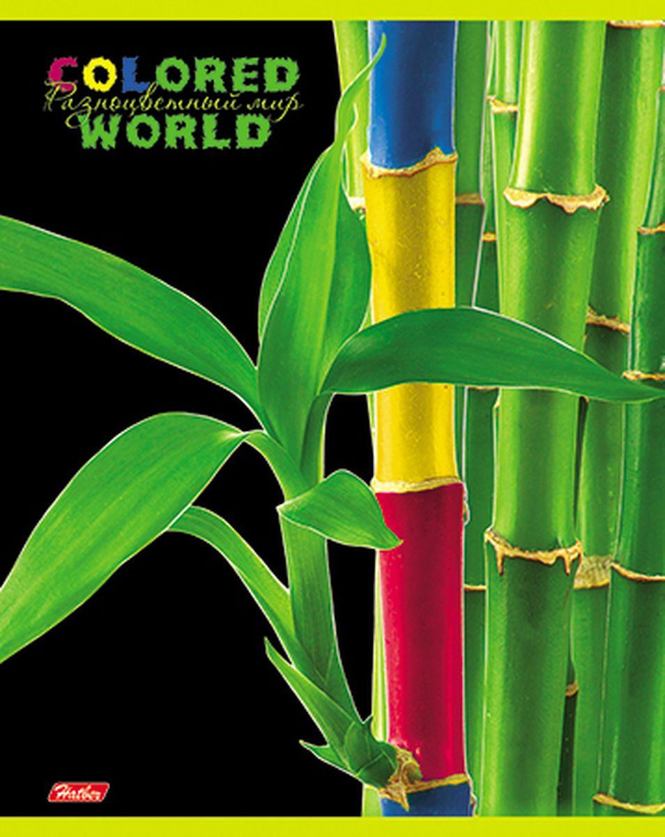 Hatber Тетрадь Разноцветный мир 96 листов в клетку 1455796Т5вмВ1_14557Тетрадь Hatber Разноцветный мир отлично подойдет для старших школьников, студентов и офисных работников.Обложка, выполненная из плотного картона, позволит сохранить тетрадь в аккуратном состоянии на протяжении всего времени использования. Лицевая сторона оформлена изображением удивительных по красоте растений, разукрашенных в яркие и причудливые цвета.Внутренний блок тетради, соединенный двумя металлическими скрепками, состоит из 96 листов белой бумаги. Стандартная линовка в клетку голубого цвета дополнена полями, совпадающими с лицевой и оборотной стороны листа.