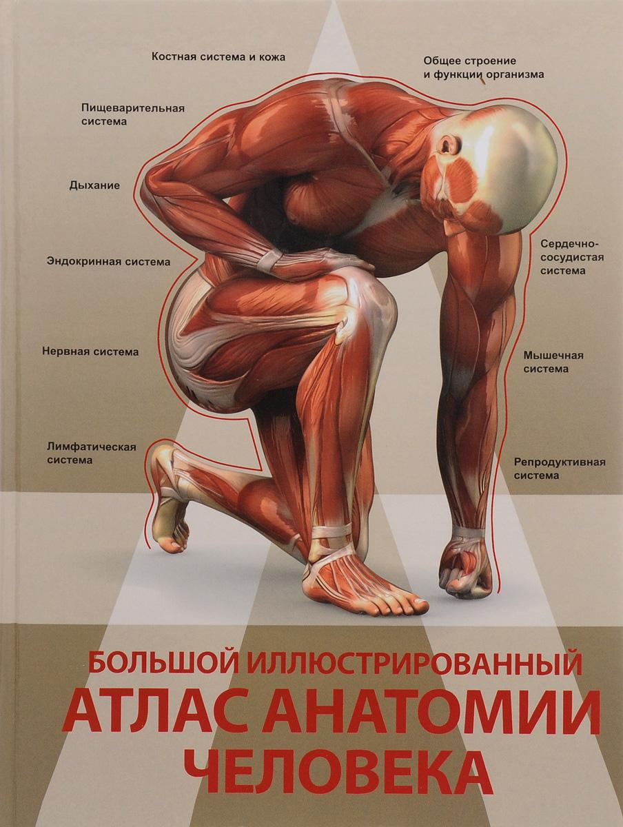 А. Р. Спектор Большой иллюстрированный атлас анатомии человека анна спектор большой иллюстрированный атлас анатомии человека