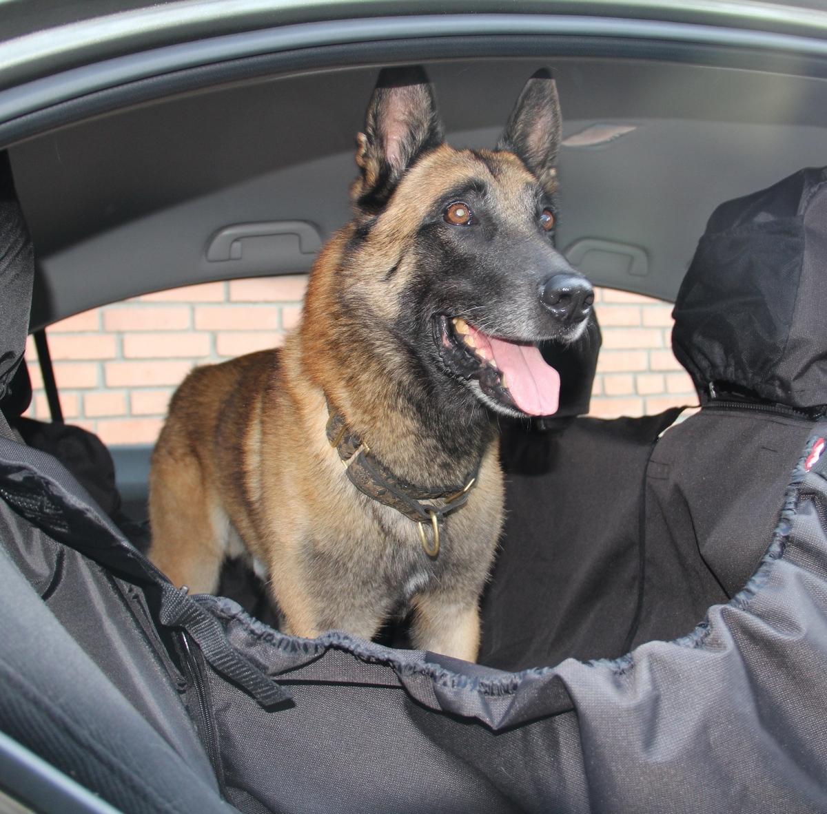 Автогамак для собак OSSO Fashion Car Premium, с защитой обивки дверей, цвет: серый