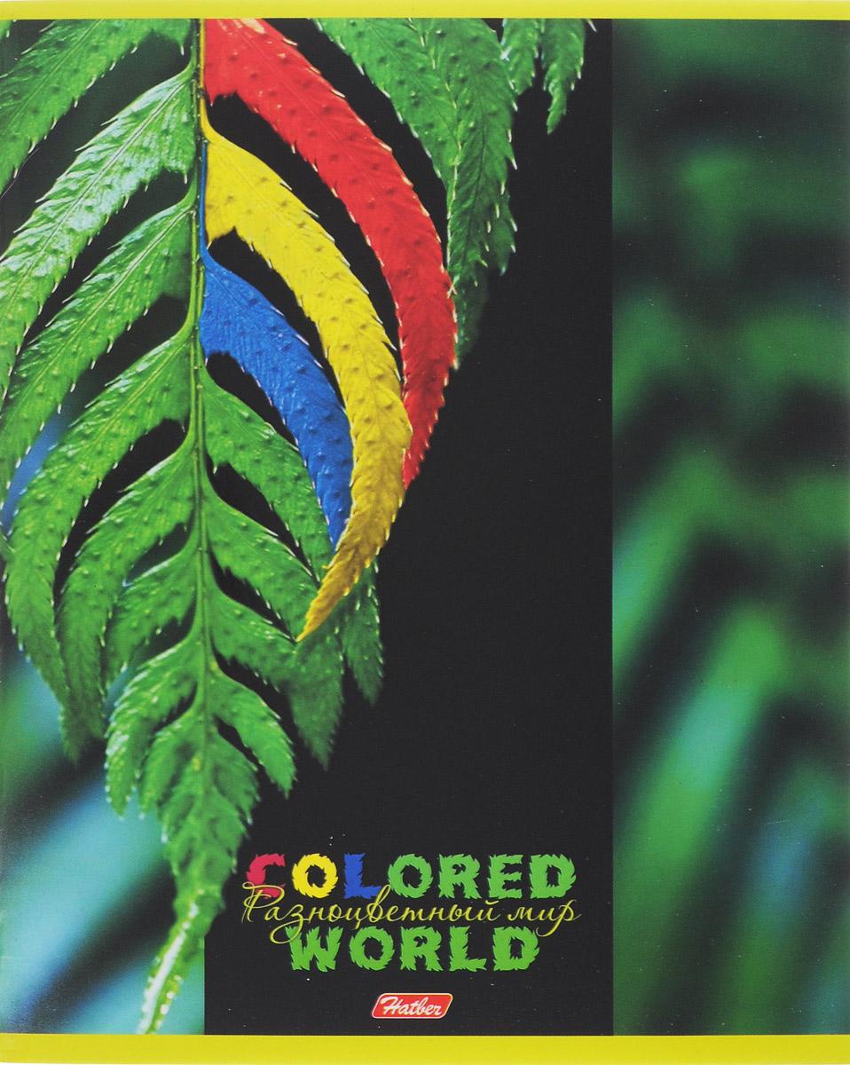Hatber Тетрадь Разноцветный мир 96 листов в клетку 1456196Т5вмВ1_14561Тетрадь Hatber Разноцветный мир отлично подойдет для старших школьников, студентов и офисных работников.Обложка, выполненная из плотного картона, позволит сохранить тетрадь в аккуратном состоянии на протяжении всего времени использования. Лицевая сторона оформлена изображением удивительных по красоте растений, раскрашенных в яркие и не свойственные природе причудливые цвета.Внутренний блок тетради, соединенный двумя металлическими скрепками, состоит из 96 листов белой бумаги. Стандартная линовка в клетку голубого цвета дополнена полями, совпадающими с лицевой и оборотной стороны листа.