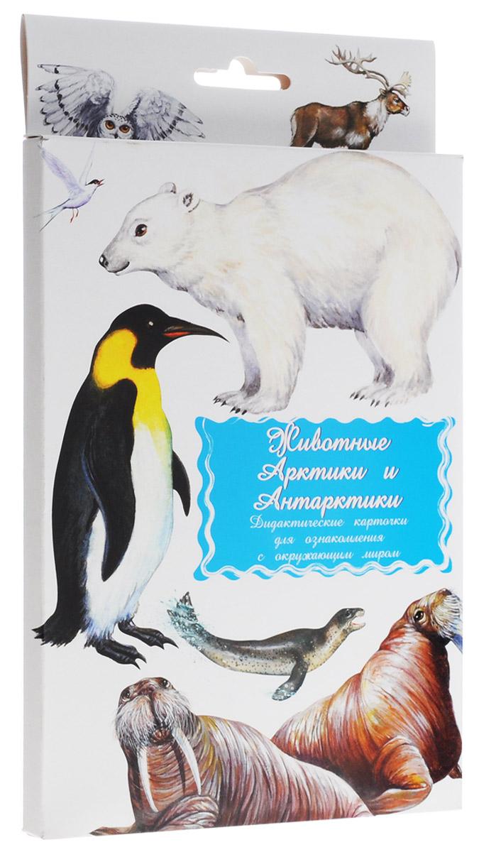 Маленький гений-Пресс Обучающие карточки Животные Арктики и Антарктики маленький гений пресс обучающие карточки правила дорожного движения