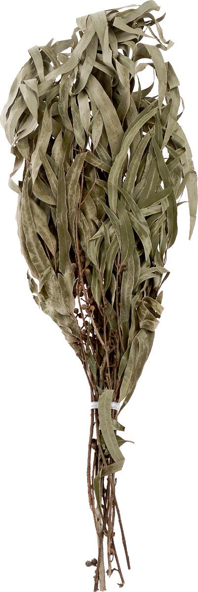 Веник Оригинальный, эвкалиптовыйБ192Банный веник - настоящий символ русской бани, использование веника в бане древняя традиция, имеющая глубокие корни.Полезность эвкалипта была открыта еще очень давно. Эвкалиптовым веником лечат заболевания органов дыхания и дыхательных путей. Кроме того, масла эвкалипта обладают очень хорошим антибактериальным и очищающим воздействием на кожу человека. Эфирное масло, содержащееся в этом растении, способствует снижению риска онкологических заболеваний и укрепляет иммунитет.Веник увеличивает целебные и оздоровительные свойства бани и является профилактическим средством большинства заболеваний, а также прекрасно массирует и очищает кожу. Состав: эвкалипт.Длина веника: 54 см.