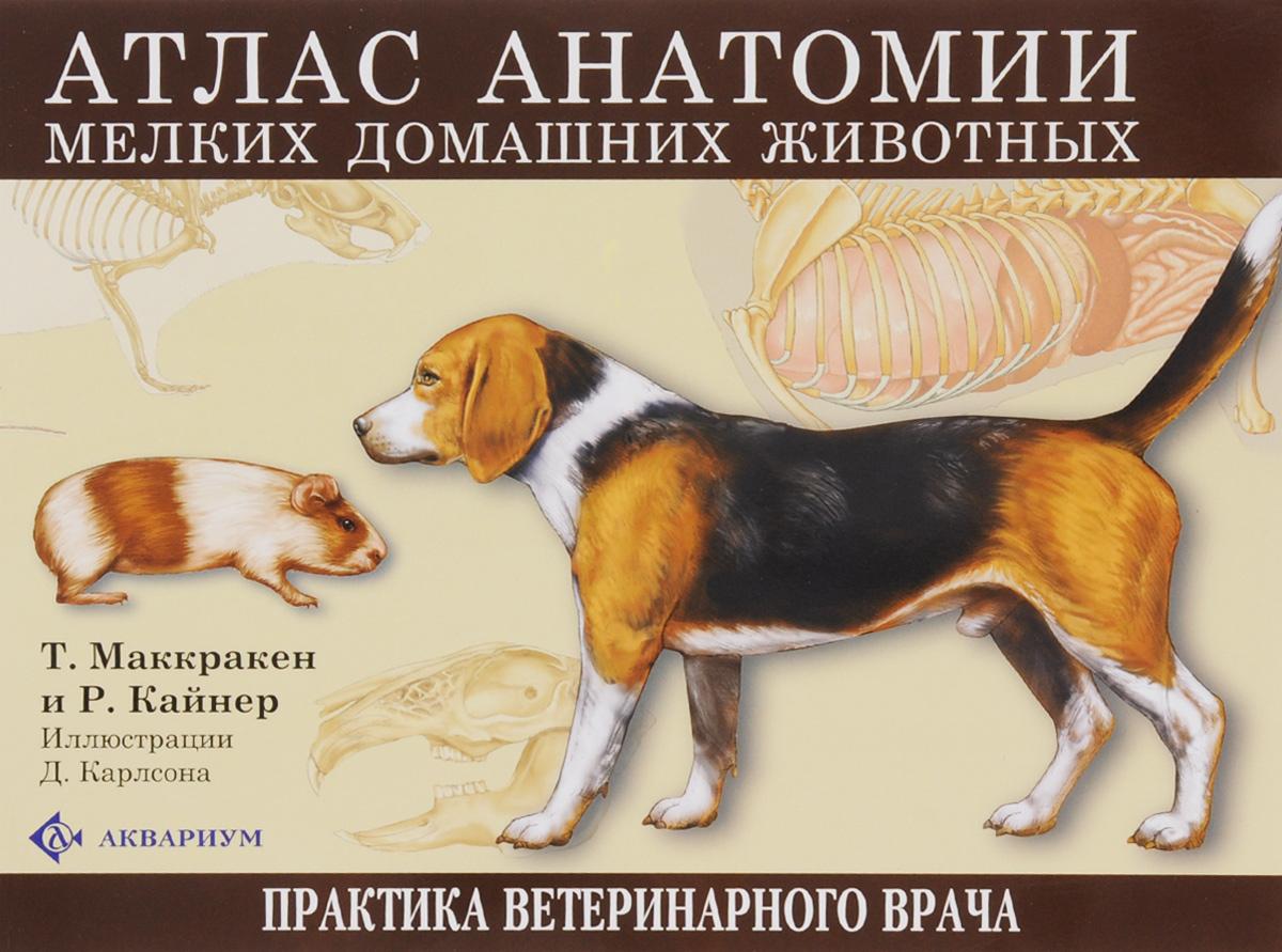 Т. Маккракен и Р. Кайнер Атлас анатомии мелких домашних животных винсент перез большой атлас анатомии человека