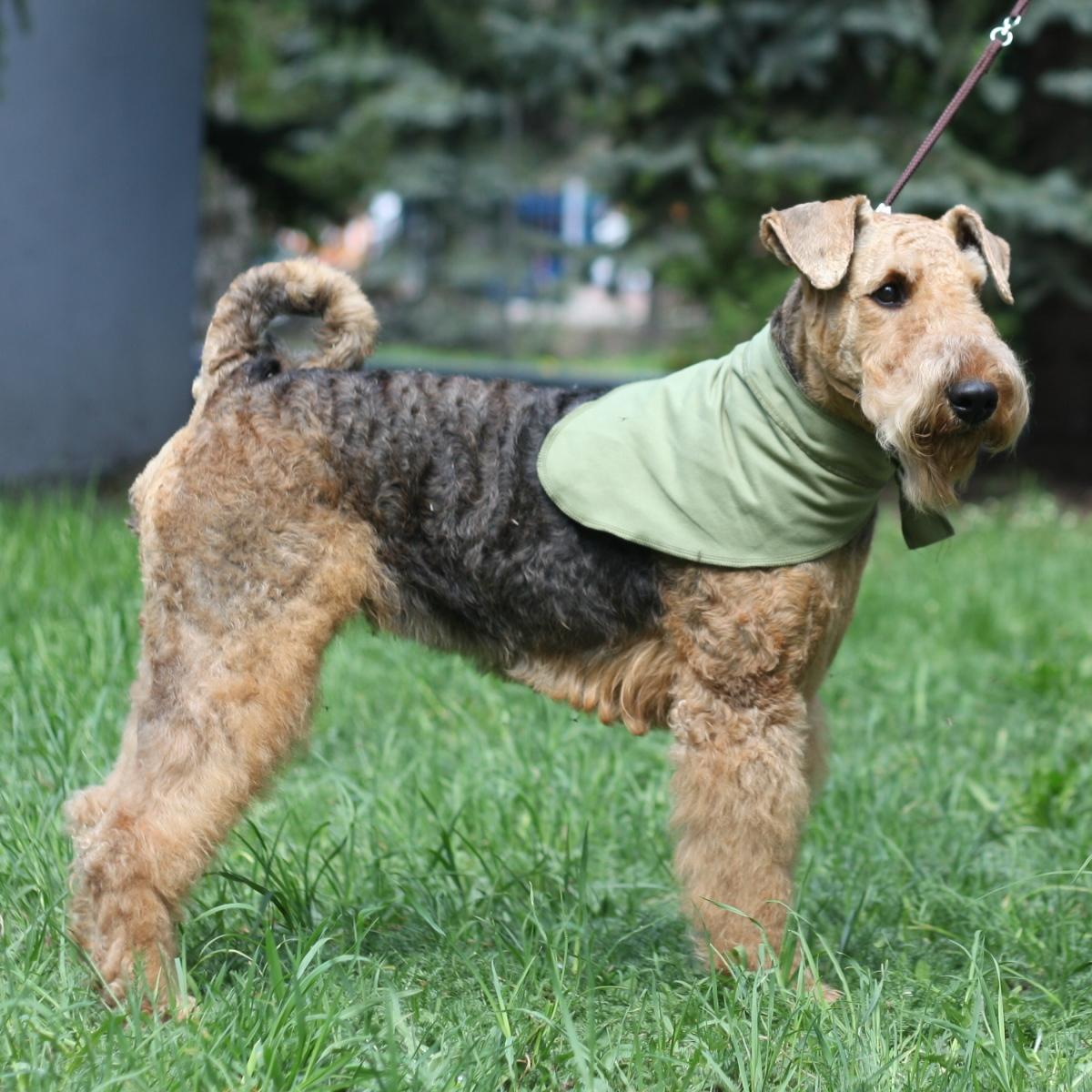 Косынка для собак Osso Fashion, охлаждающая, унисекс, цвет: оливковый. Размер LО-1007Охлаждающая косынка Osso Fashion из ткани ССТ (COOL COMFORT TECHNOLOGY) помогает собакам легче переносить жару, делает более комфортным их пребывание на солнце во время прогулки, в транспорте, на выставках, проходящих на открытом воздухе или в душном помещенииКосынка завязывается на шее животного, завязки помогают регулировать размер. Изделие охлаждает шею собаки, к тому же это красивый аксессуар.Охлаждающее изделие Osso Fashion сшито из инновационной ткани ССТ (COOL COMFORT TECHNOLOGY), которая создает персональную зону охлаждения и обеспечивает комфортную терморегуляцию на длительное время. Охлаждение ткани обеспечивается за счет уникальной структуры переплетения волокон, создающих капиллярные сети повышенной плотности. Серебросодержащее волокно X-Static, входящее в состав ткани, придает ей антистатические и антимикробные свойства. Длительное использование и многократные стирки не влияют на охлаждающие свойства ткани. В отличие от охлаждающих тканей предыдущего поколения, эта ткань не имеет химической пропитки и не содержит охлаждающих гелей.При активации изделия (встряхивании) происходит максимальное охлаждение за счет испарения воды. Однако - из-за уникальной комбинации волокон и их взаимодействия между собой - испарение и потеря влаги происходит медленно, поскольку одновременно идет мощное впитывание паров и водоотведение.Чтобы активировать охлаждающее действие изделия его нужно намочить, отжать и встряхнуть. Подходит вода из любого источника: из-под крана, дождевая, речная, морская, влага от потоотделения - они реактивируют охлаждающую функцию снова и снова.Длина: 72 см.Ширина: 28 см.Одежда для собак: нужна ли она и как её выбрать. Статья OZON Гид