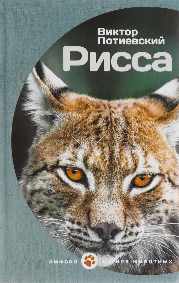 Виктор Потиевский Рисса купить три товарища книгу