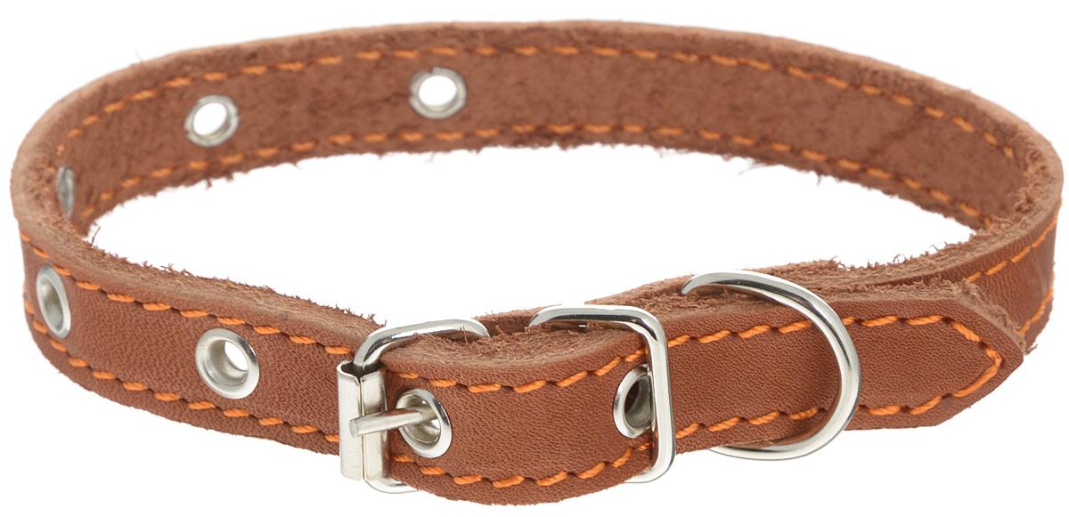 """Ошейник для собак Каскад """"Классика"""", цвет: коричневый, ширина 2 см, обхват шеи 32-40 см"""