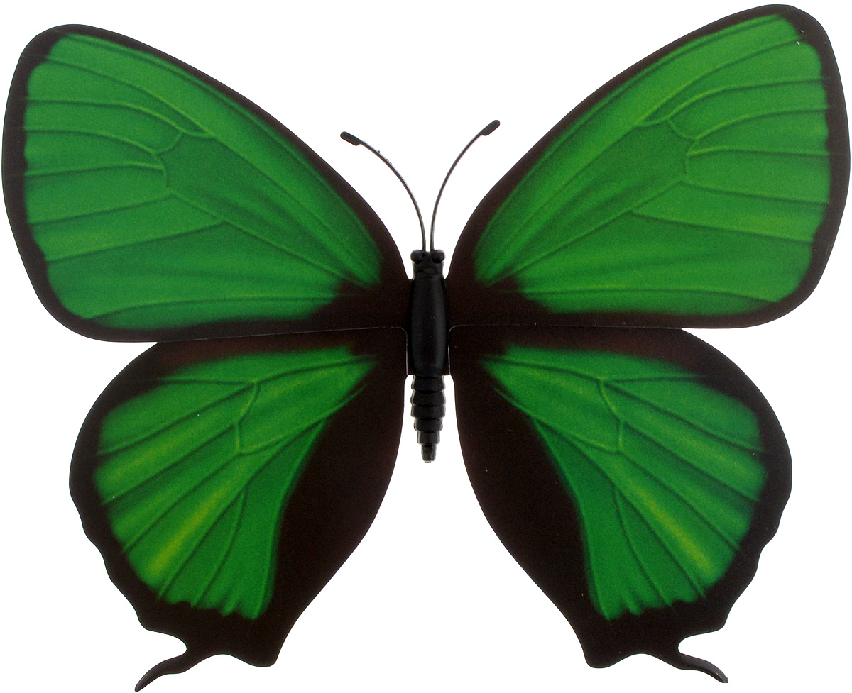 Декоративное украшение Village People Тропическая бабочка, с магнитом, цвет: зеленый (24), 12 х 8 см68610_24_зеленыйДекоративная фигурка Village People Тропическая бабочка изготовлена из ПВХ. Изделие выполнено в виде бабочки и оснащено магнитом, с помощью которого вы сможете поместить изделие в любом удобном для вас месте. Это не только красивое украшение, но и замечательный способ отпугнуть птиц с грядок. Яркий дизайн фигурки оживит ландшафт сада.