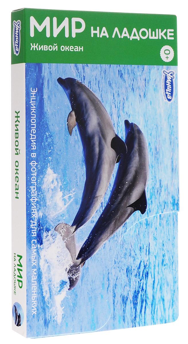 Умница Обучающие карточки Живой океан раннее развитие умница мир на ладошке 1  живой океан