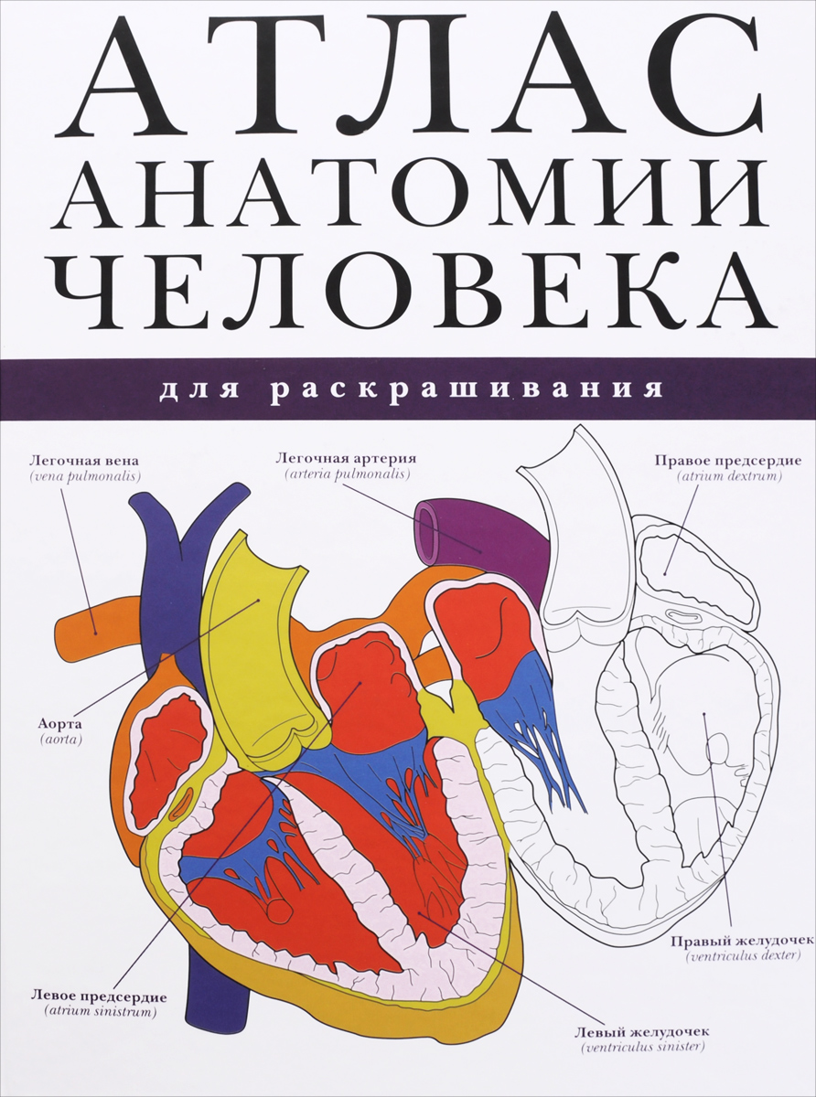 Атлас анатомии человека для раскрашивания книги владис иллюстрированный атлас анатомии и физиологии человека
