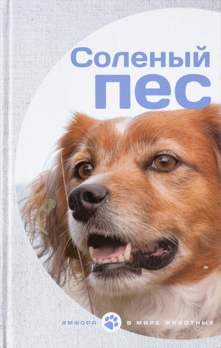 Соленый пес дабоматик что такое