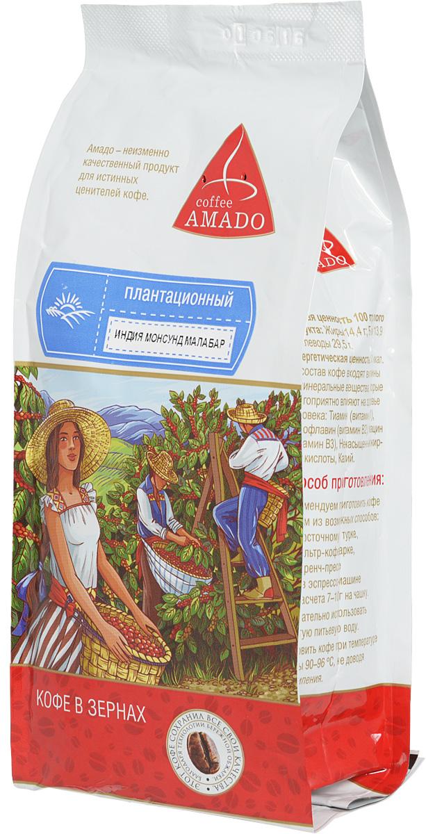 AMADO Индия Монсунд Малабар кофе в зернах, 500 г4607064132843В сезон муссонов в Индии зерна кофе помещают под навесы на несколько дней. Пребывание в условиях повышенной влажности и ветра меняет цвет зерен с зеленого на желтоватый, а вкус кофе приобретает сладость. Рекомендуемый способ приготовления AMADO Индия Монсунд Малабар: по-восточному, френч-пресс, гейзерная кофеварка, фильтркофеварка, кемекс, аэропресс.