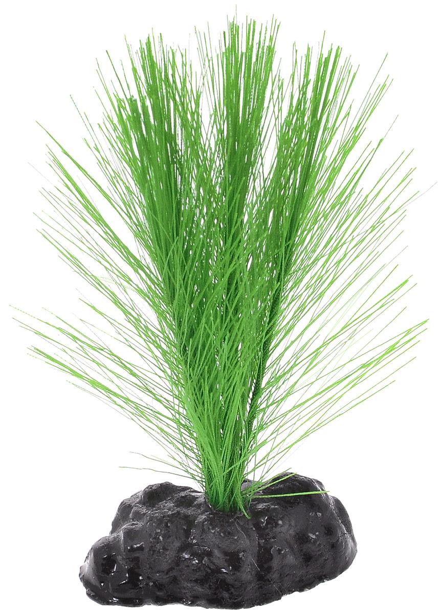 Растение для аквариума Barbus Амбулия, шелковое, высота 10 смPlant 034/10Растение для аквариума Barbus Амбулия, выполненное из качественного шелка, станет оригинальным украшением вашего аквариума. В воде создается абсолютная имитация живого растения. Можно использовать в любой воде: пресной или морской. Изделие полностью безопасно для обитателей аквариума, не токсично, нейтрально к водному балансу, устойчиво к истиранию краски.Растение Barbus поможет вам смоделировать потрясающий пейзаж на дне вашего аквариума или террариума.Высота растения: 10 см.