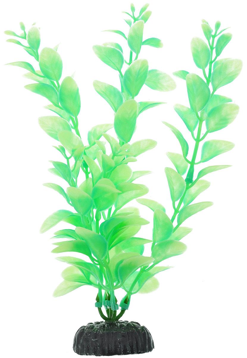 Растение для аквариума Barbus Людвигия, пластиковое, светящееся, высота 20 смPlant 057 DARK/20Растение Barbus Людвигия выполнено из высококачественного нетоксичного пластика. Оно светится в темноте и станет оригинальным и необычным украшением вашего аквариума. Изделие не требует дополнительного ухода Оно абсолютно безопасно, нейтрально к водному балансу, устойчиво к истиранию краски, подходит как для пресноводного, так и для морского аквариума. Растение для аквариума Barbus Людвигия поможет вам смоделировать потрясающий пейзаж на дне вашего аквариума или террариума.Высота растения: 20 см.