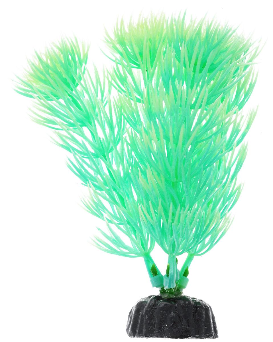 Растение для аквариума Barbus Амбулия, пластиковое, светящееся, высота 10 смPlant 055 DARK/10Растение Barbus Амбулия выполнено из высококачественного нетоксичного пластика. Оно светится в темноте и станет оригинальным и необычным украшением вашего аквариума. Изделие не требует дополнительного ухода Оно абсолютно безопасно, нейтрально к водному балансу, устойчиво к истиранию краски, подходит как для пресноводного, так и для морского аквариума. Растение для аквариума Barbus Амбулия поможет вам смоделировать потрясающий пейзаж на дне вашего аквариума или террариума.Высота растения: 10 см.