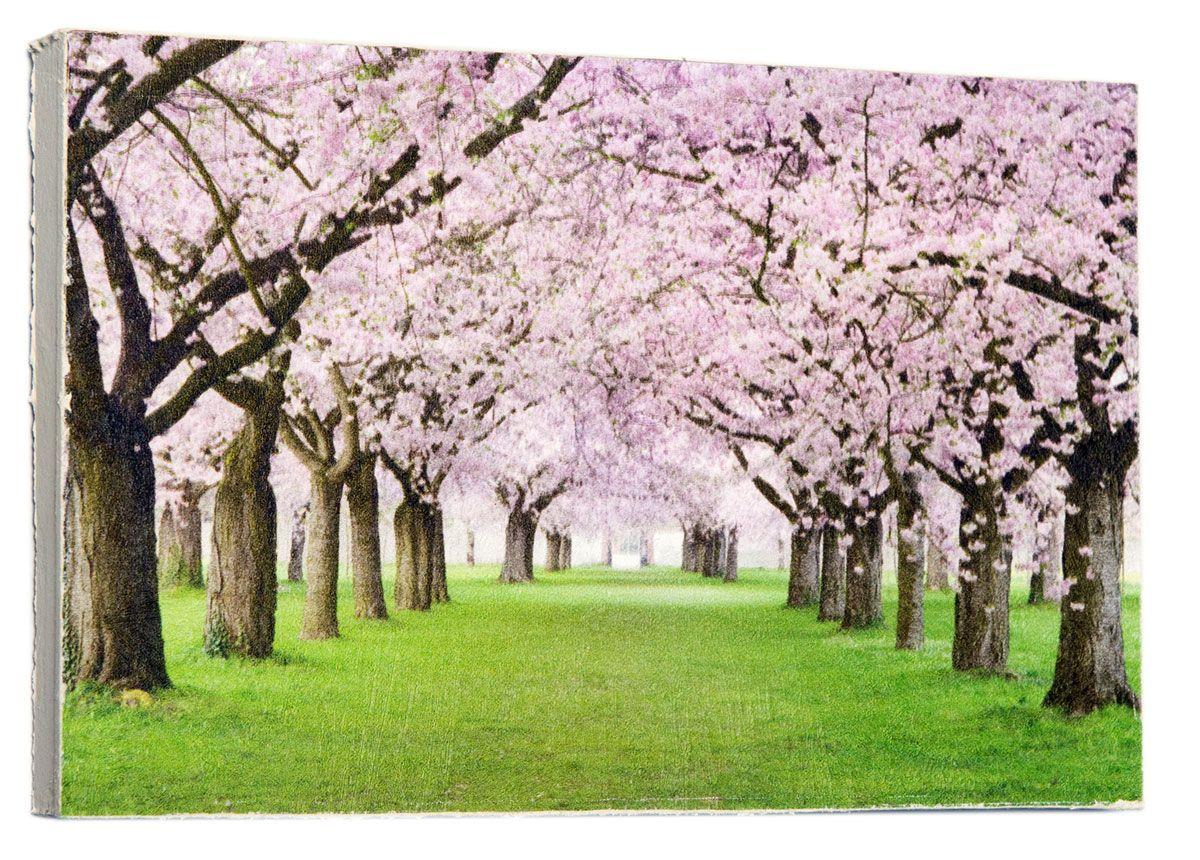 Картина Mister Poster Розовые цветы вишни, 22 х 14,5 см0217-15-22Картина Mister Poster - это высококачественная репродукция на деревянной раме. Лицевая поверхность имитирует штукатурку или натуральный холст, края окрашены вручную специальным декоративным составом.Современные технологии, уникальное оборудование и оригинальные чернила, используемые при изготовлении, делают постер устойчивым к выцветанию, а также гарантируют стойкость к воздействию негативных внешних факторов. Интерьер дома и офиса, в котором находится человек, в значительной степени влияет на его настроение и работоспособность. Правильное оформление интерьера создает благоприятный психологический климат, улучшает настроение и мотивирует. Добавьте «красок» в ваш интерьер и, возможно, в вашу жизнь.