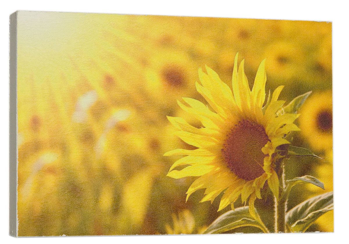 Картина Цветок подсолну х а в солнечных лучах , 14,5 х 22 см0478-15-22