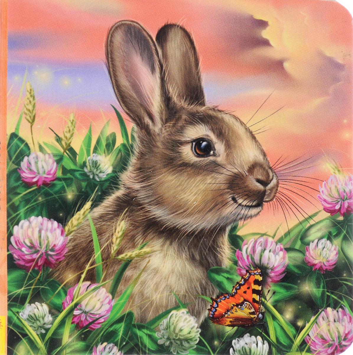 Картинки с кроликом для детей