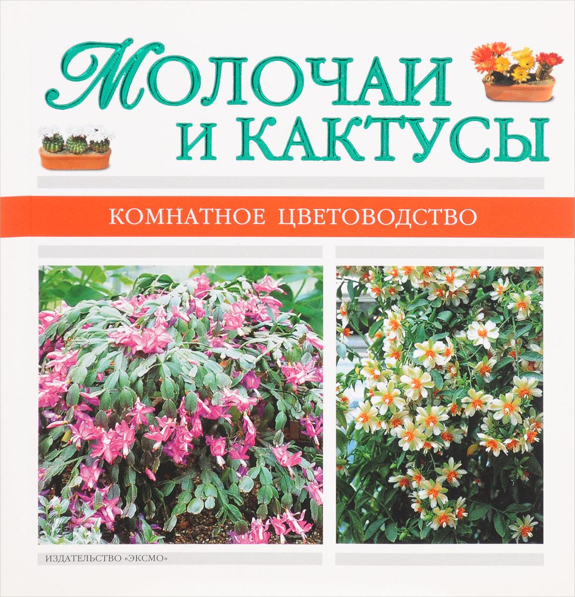Молочаи и кактусы кактусы как разводить